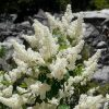 deer brush flower essence