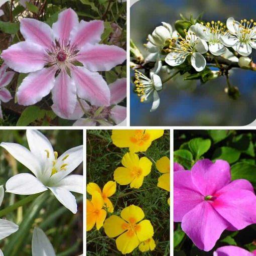 rescue remedy flower essence