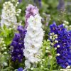larkspur flower essence